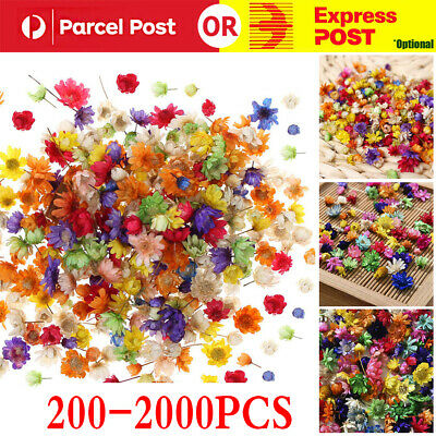 AU9.94 • Buy 200-2000PCS Real Dried Flowers For Art Craft Epoxy Resin Candle Making Jewellery
