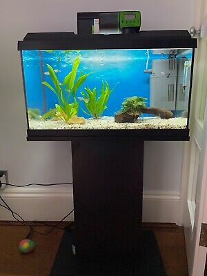 £80 • Buy Juwel Fish Tank With A Stand And Full Equipment In Very Good Condition.