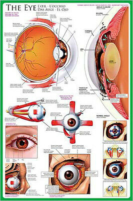 $16.19 • Buy THE ANATOMY OF THE HUMAN EYE Medical Science Wall Chart Educational POSTER