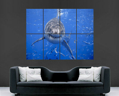 £17.99 • Buy Great White Shark Poster Sea Fish Giant Large Wall Art Poster Picture Big