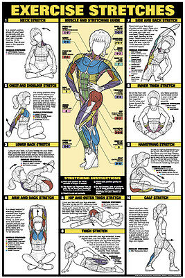 Womens EXERCISE STRETCHING WALL CHART Professional Fitness Club Gym POSTER • 14.58£