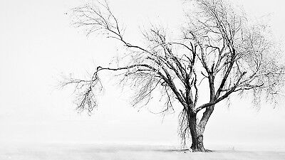 Black And White Tree - Nature Winter Drawing Landscape Poster / Canvas Pictures • 16.99£