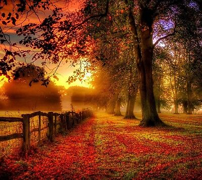 Country Landscape - Autumn Trees Field Sunset Poster & Canvas Picture Prints • 21.99£