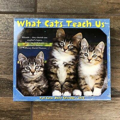 AU18.03 • Buy 2018 What Cats Teach Us Desk Calendar,  Assorted Cats By Willow Creek Press  M21