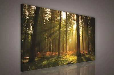 Forest Trees Landscape CANVAS WALL ART DECO LARGE READY TO HANG NIGHT All Siz • 40£