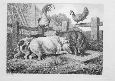 1801 ORIGINAL ETCHING Print By Howitt - Farm Yard Pigs Hen & Rooster • 27.51£
