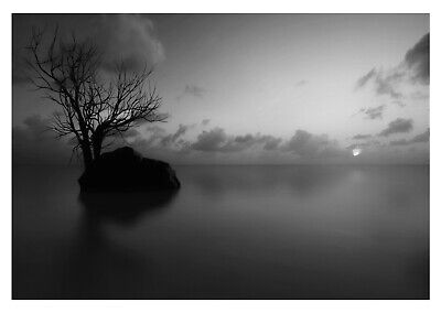 £10.79 • Buy Lake Tree Silhouette - Black And White Landscape Large Poster & Canvas Pictures