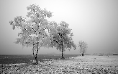 £10.79 • Buy Winter Trees Field Contemporary - Black And White Large Poster & Canvas Pictures