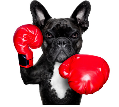 £10 • Buy French Bulldog Red Boxing Glove Canvas Wall Art Wood Framed Ready To Hang XXL ,