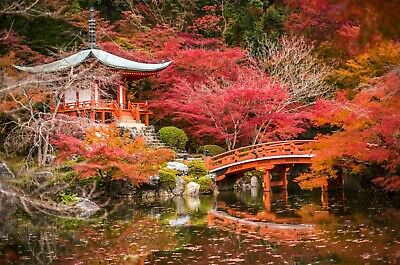 £11.69 • Buy Japanese Garden Colourful Trees Landscape Wall Art Poster & Canvas Pictures