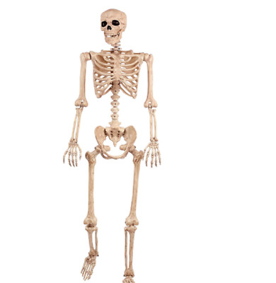 $26.98 • Buy 6 Ft Life Size Jointed Skeleton Halloween Party Haunted House Decoration Props