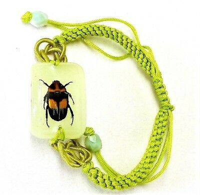 $5.60 • Buy Two-tone Beetle Insect Bracelet In Resin Specimen Collection