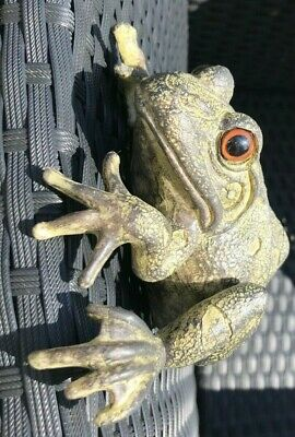 Climbing Fence Hanging Frog/ Toad Outdoor Garden Ornament • 15.70£