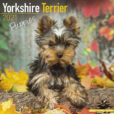 Yorkshire Terrier (Puppies) 2021 Puppy Calendar 15% OFF MULTI ORDERS! • 9.40£
