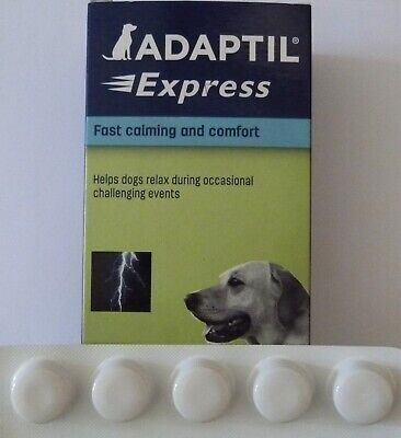 £7.99 • Buy Adaptil Express- Fast Calming Comfort- Stress Anxiety Travel 5 Tablet Trial Size