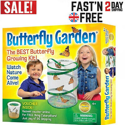 £21.99 • Buy Insect Lore Butterfly Garden Your Own Model Science Kit Kids Gift Toy For Kids