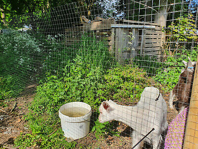 Chicken Wire Welded Mesh Aviary Fence 1 X1  Squere Rabbit Garden 1m X 15m Roll • 22.99£