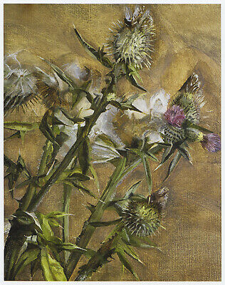 Thistle Lucian Freud Botanical Print In 11 X 14 Inch Mount SUPERB • 21.95£