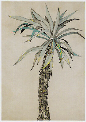 Palm Tree Lucian Freud Botanical Print In 11 X 14 Inch Mount SUPERB • 19.95£