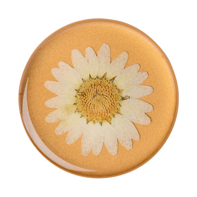 AU24.50 • Buy POPSOCKETS - Pressed Flower White Daisy -SWAPPABLE- ORIGINAL PREMIUM POPSOCKET