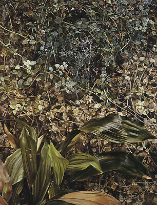 Two Plants Lucian Freud Botanical Print In 11 X 14 Inch Mount SUPERB • 19.95£