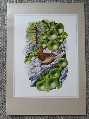 Vintage C. F. Tunnicliffe A4 Print Wren Painting • 3.50£