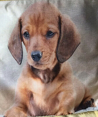 £6.99 • Buy 🇬🇧Beautiful Cushion Cover With An Adorably Cute Dachshund Puppy.