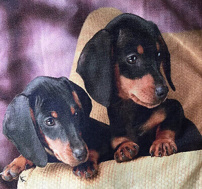 £6.99 • Buy 🇬🇧Beautiful Cushion Cover With An Adorably Cute Pair Of Dachshund Puppies.