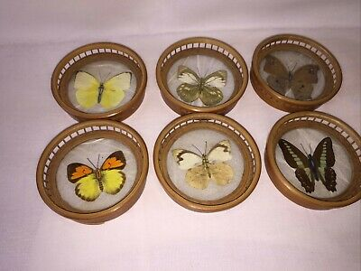 £14 • Buy  Butterfly Coasters In Holder Bamboo Some Wear & Tear Please See Photos