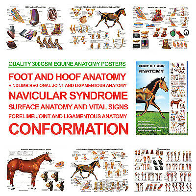 Foot And Hoof Horse Anatomy A3 Posters For Farriers, Farriery, Vets RRP £24.99! • 24.95£