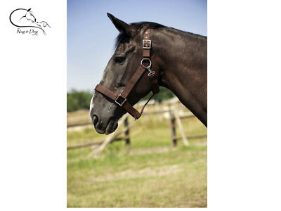 Ekkia  Draught Horse Headcollar Clydesdale Shire 3.8CM Wide Triple Thickness  • 13.29£