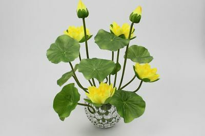 $ CDN6.20 • Buy 10PCs Seeds Bowl Lotus Hydroponic Plants Aquatic Flower Water Lily Home Garden