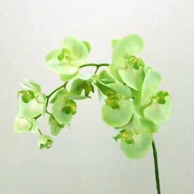AU3.53 • Buy Phalaenopsis Orchid Green Flowers 100 Seeds Perennial Bloom Professional Pack