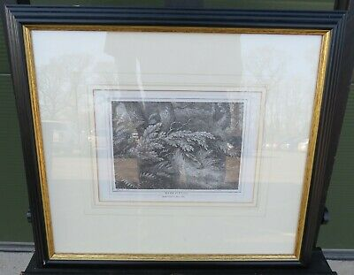 Antique Framed Samuel Howitt Etching 'Hare Sitting' Mason 1834 • 50£