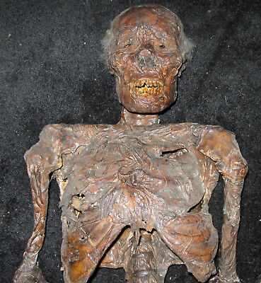$1100 • Buy Life Size Rotting Corpse Skeleton - 60  Tall