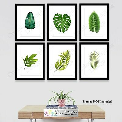 Botanical Prints Plant Leaf Photo Pictures Wall Art Fern Palm Leaves 35 Types • 2.99£