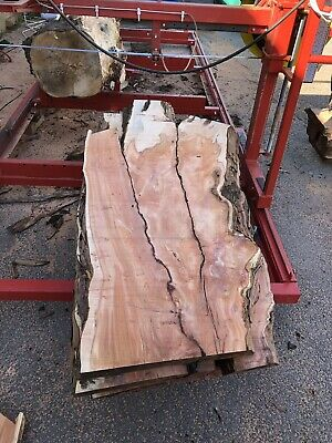 Waney/Live Edge Yew Character Wood Board/Slab/Plank • 100£