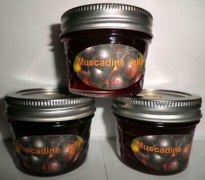 $1.99 • Buy Fresh MUSCADINE JELLY 1/4 Pint (4 Oz.), I Also Have Larger Sizes