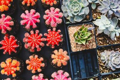 Esquejes Plantas Crasas Cuttings • 1.29£