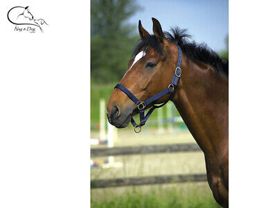 Ekkia Draught Horse Headcollar Clydesdale Shire Triple Thickness Leather Lined • 13.41£