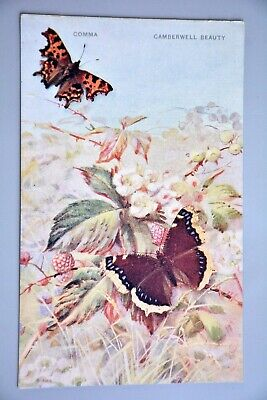 R&L Postcard: Photochrom, Butterfly, Comma, Camberwell Beauty • 4.99£