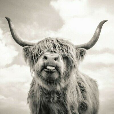 £18 • Buy Grey Highland Cow CANVAS WALL ART HOME DECOR PICTURE PRINT FRAMED 16X16INCHES