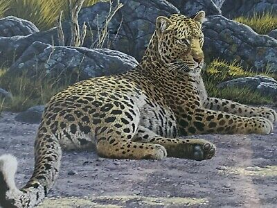 """£27 • Buy Limited Edition Stephen Gayford """"Leopard Sanctuary"""" Print, Signed With Frame"""