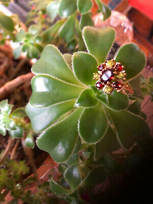 Garnet And Peridot Ladies Gold Ring L • 39£