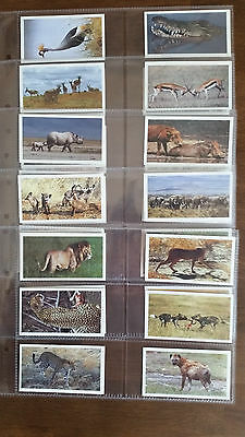 Grandee Cigarette/Cigar Cards AFRICAN WILDLIFE - Set Of 30 In Sleeves • 3.25£