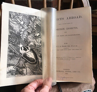 £34.99 • Buy WOOD, REV. J.G. / INSECTS ABROAD /1st Edit. 1874 / ILLUSTRATED BEETLES MOTHS Etc