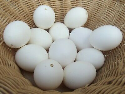 £10 • Buy BLOWN Chicken White EGGS For Easter Painting Crafts 12 Pcs