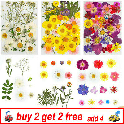 AU9.99 • Buy Real Dried Flowers Pressed Leaves For Epoxy Resin Jewelry Making DIY BH