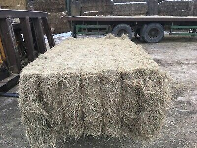 £100 • Buy Hay Bales For Horses. First Quality Meadow Hay In 400kg Square Bales.
