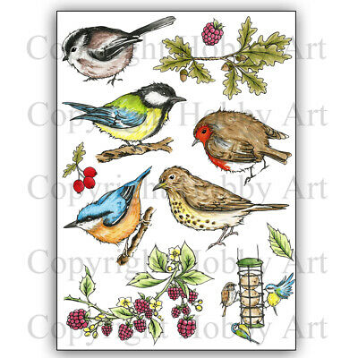 £14.99 • Buy Hobby Art Clear Stamps - BIRDS OF THE HEDGEROW